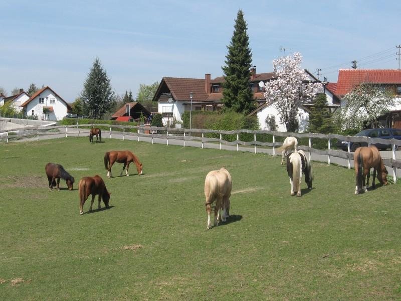 Ferienwohnung mit Terrasse - Die Terrasse